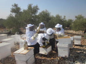 Beehives Hands-on Training-Al Kafryat WB