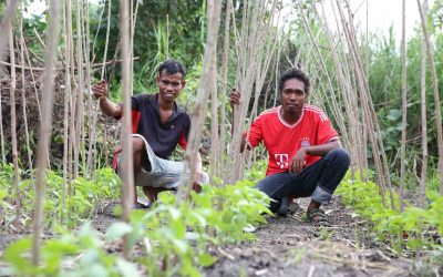 Strengthening and Supporting Rural Farmers Organisations in Timor Leste