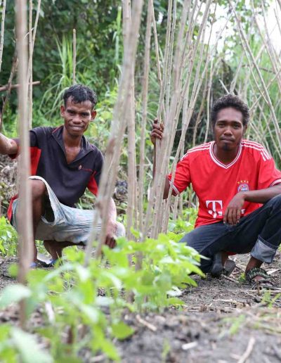 farmers-timor-small