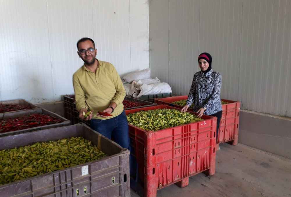 Farming for Palestinian Resilience