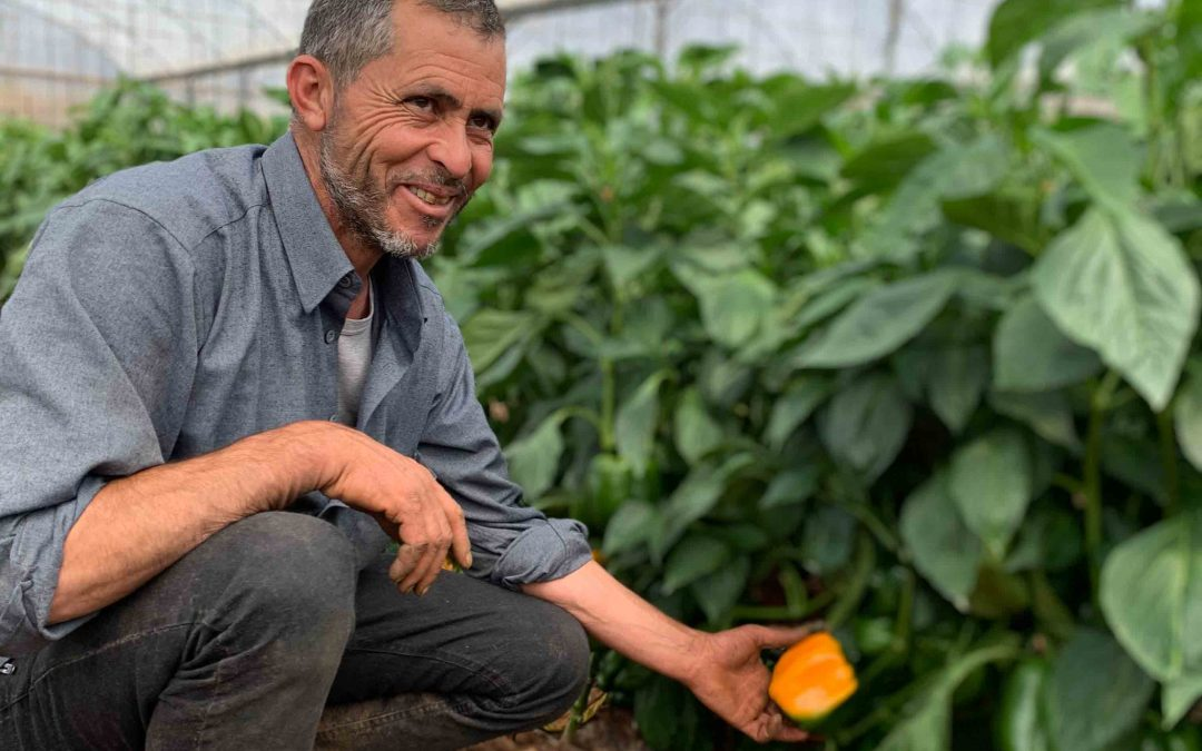 Mohammed Finds Path to Resilience through Agriculture in the West Bank
